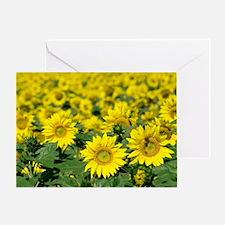 Sunflowers - Greeting Card