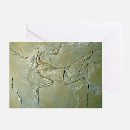 Archaeopteryx fossil - Greeting Card