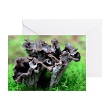 Black chanterelle mushrooms - Greeting Card