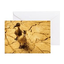 Drought - Greeting Card