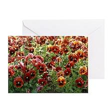 Pansies (Viola sp,) - Greeting Card