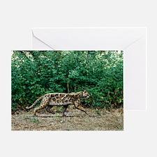 Prehistoric cat, artwork - Greeting Card
