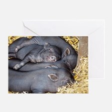 Vietnamese pot-bellied piglets - Greeting Card