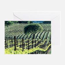 Vineyard - Greeting Card