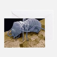 Worker termite, SEM - Greeting Card