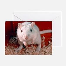 Laboratory gerbil - Greeting Card
