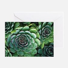 'Hens and chicks' succulents - Greeting Card