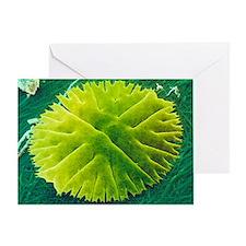 Green alga, Micrasterias - Greeting Card