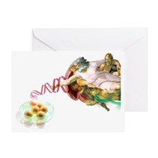 Stem cells and God - Greeting Card
