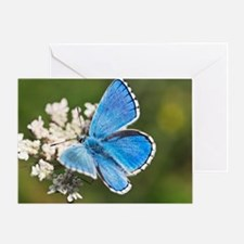 Adonis blue butterfly - Greeting Card