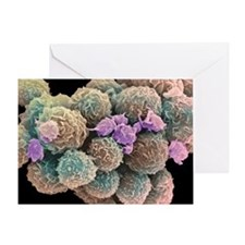 White blood cells and platelets - Greeting Card