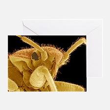 Bedbug, SEM - Greeting Card