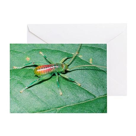 Bush-cricket nymph - Greeting Card