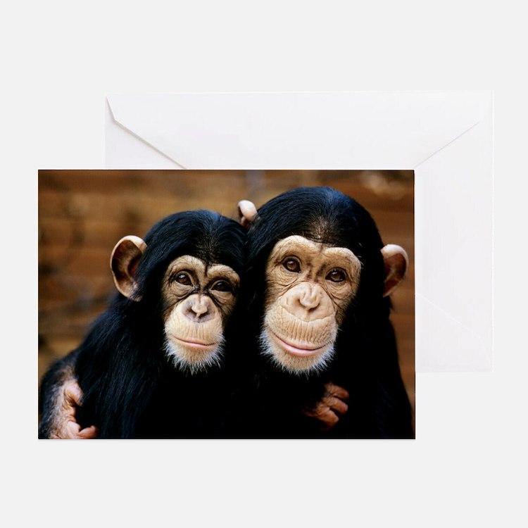 Chimpanzees - Greeting Card