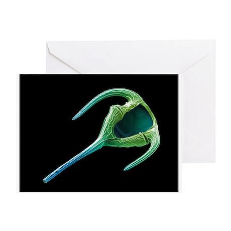 Dinoflagellate protozoan, SEM - Greeting Card