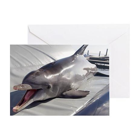 Dolphin training - Greeting Card