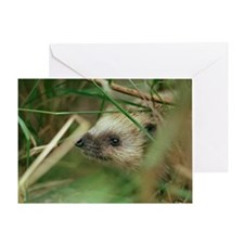 European hedgehog - Greeting Card