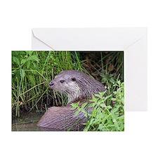 European otter - Greeting Card