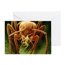 Garden ant carrying a rose aphid, SEM - Greeting C
