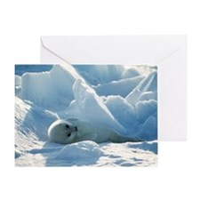 Harp seal pup - Greeting Card