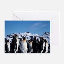King penguins - Greeting Card