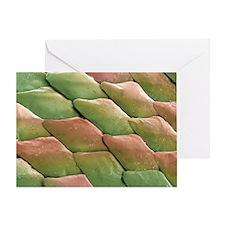 Python skin, SEM - Greeting Card
