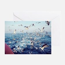 Seagulls - Greeting Card