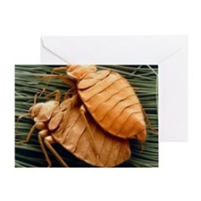SEM of bed bugs - Greeting Card