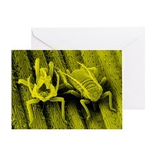 SEM of the bird 'cherry aphid' - Greeting Card