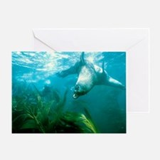Southern fur seal - Greeting Card