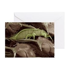Thrips, SEM - Greeting Card