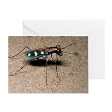 Tiger beetle - Greeting Card