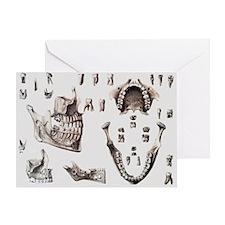 Dental anatomy - Greeting Card