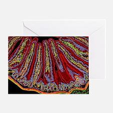 Small intestine villi, section - Greeting Card