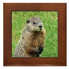 Woodchuck Eating Framed Tile