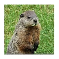 Woodchuck Eating Tile Coaster