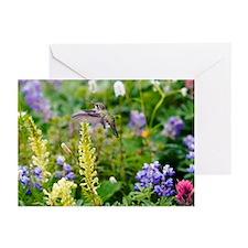 Calliope Hummingbird - Greeting Cards (Pk of 10)