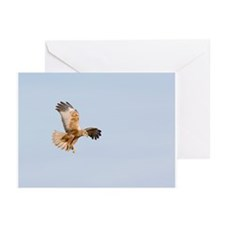 Marsh harrier hunting - Greeting Cards (Pk of 10)