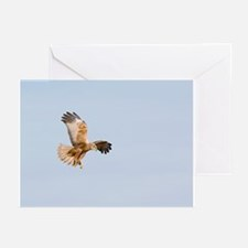 Marsh harrier hunting - Greeting Cards (Pk of 10)
