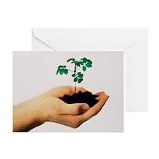 Seedling - Greeting Cards (Pk of 10)