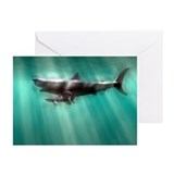 Shark Greeting Cards (10 Pack)