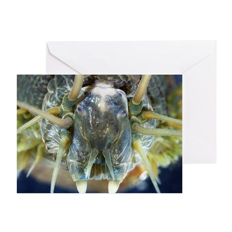 Ragworm head - Greeting Cards (Pk of 10)