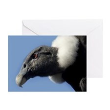 Andean condor - Greeting Cards (Pk of 10)