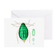 Bean aphid - Greeting Cards (Pk of 10)