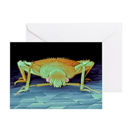 Bed bug, SEM - Greeting Cards (Pk of 10)