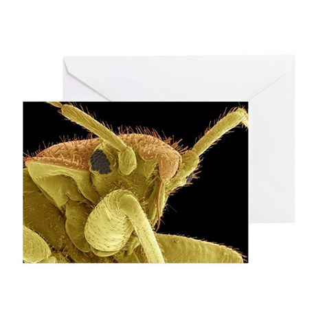 Bedbug, SEM - Greeting Cards (Pk of 10)