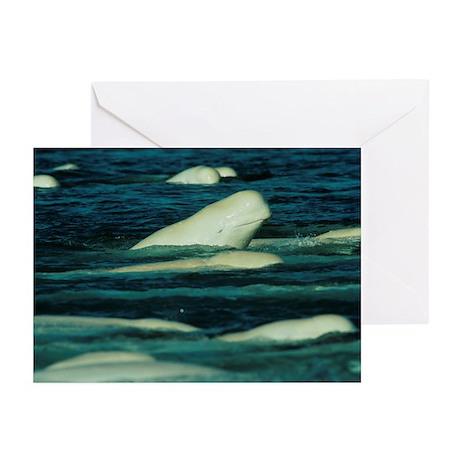 Beluga whales - Greeting Cards (Pk of 10)