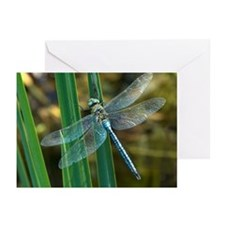 Male emperor dragonfly - Greeting Cards (Pk of 10)