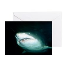 Sand tiger shark - Greeting Cards (Pk of 10)