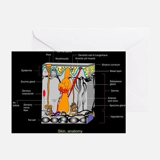 Skin anatomy, artwork - Greeting Cards (Pk of 10)